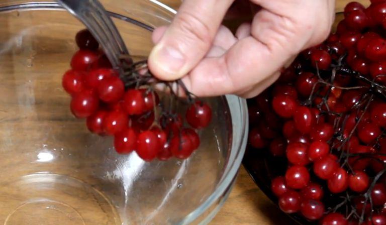 Заготовка калины на зиму – лучшие рецепты заготовок в домашних условиях